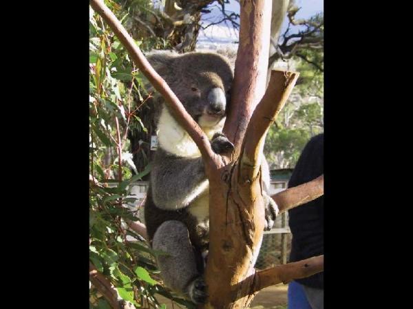 Tasmanian Wildlife Tour