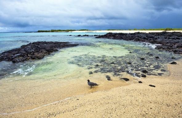 6-Day Galapagos Oceano:  Isabela - Santa Cruz - Navigable Island