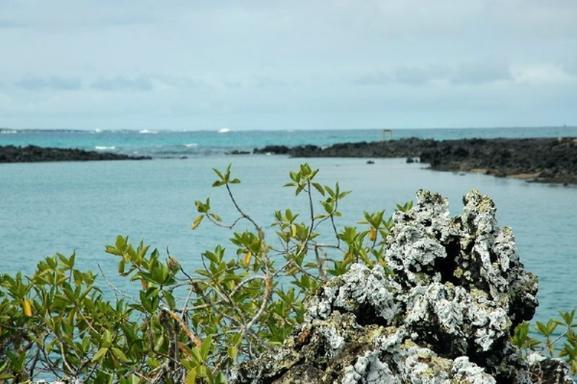6-Day Galapagos Oceano Program:  Isabela - Santa Cruz - Floreana