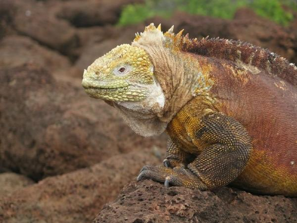 8-Day Quito & Galapagos Islands Tour Package