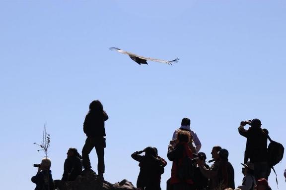 5-Day Lake Titicaca Tour: Arequipa - Colca Canyon - Puno - Sillustani