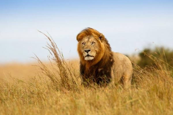 8-Day Kenya and Tanzania Safari: Amboseli - Lake Manyara - Ngorongoro - Maasai Mara