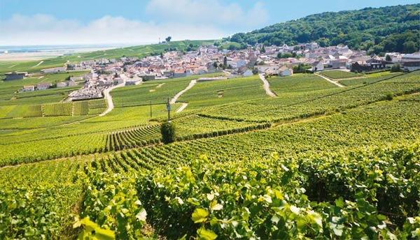 Champagne Vineyards and Cellars Day Trip From Paris**Small Group Tour**