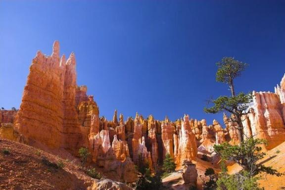 8-Day Yellowstone, Arches National Park, Antelope Canyon and Zion National Park Tour