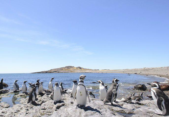 4-Day Classic Puerto Madryn Tour