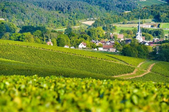 Champagne Vineyards and Cellars Day Trip From Paris