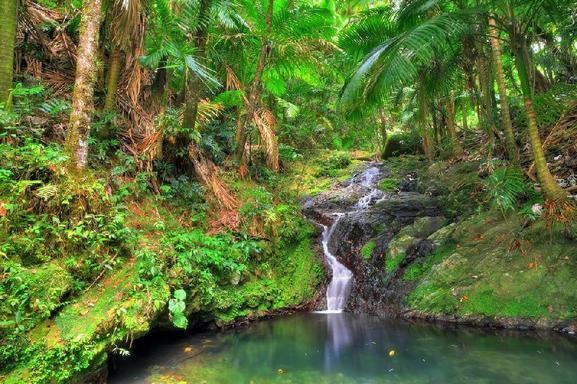 El Yunque Rainforest Day Trip From San Juan