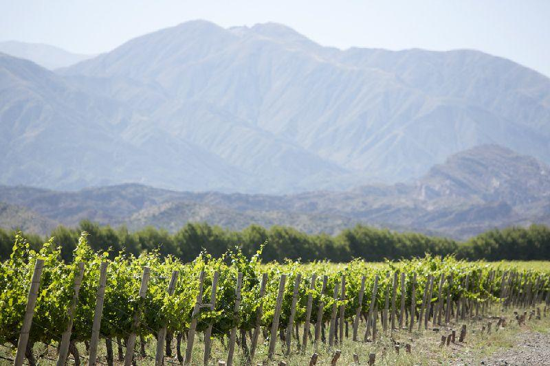 Cafayate Day Tour from Salta w/ Wine Tasting