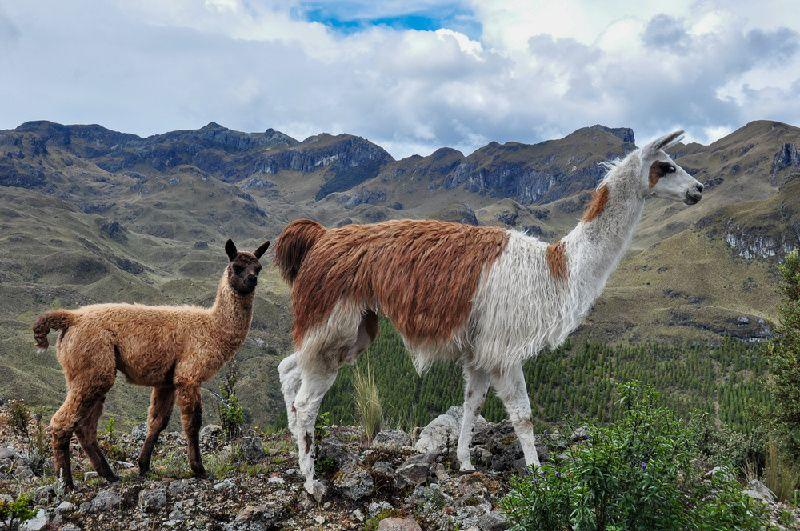 Private Cajas National Park Bird Watching Tour