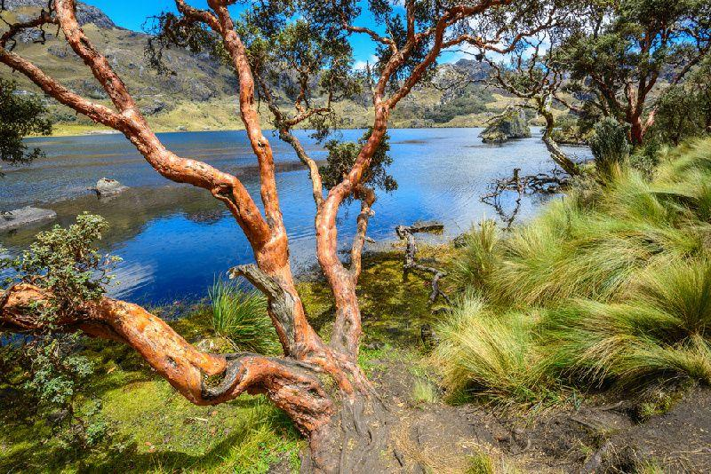Ecuador Private Birdwatching Tour: Llaviuco Lake in Cajas National Park