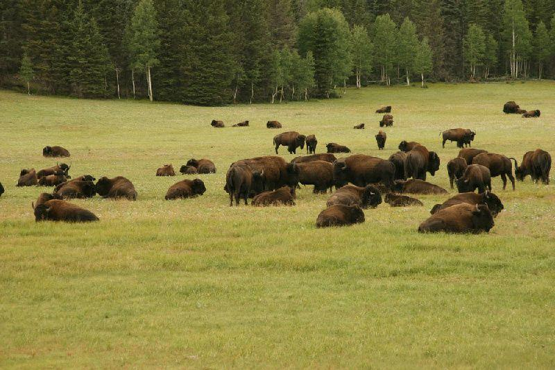4-Day Relaxing Canadian Rockies Tour From Calgary W/ Waterton National Park