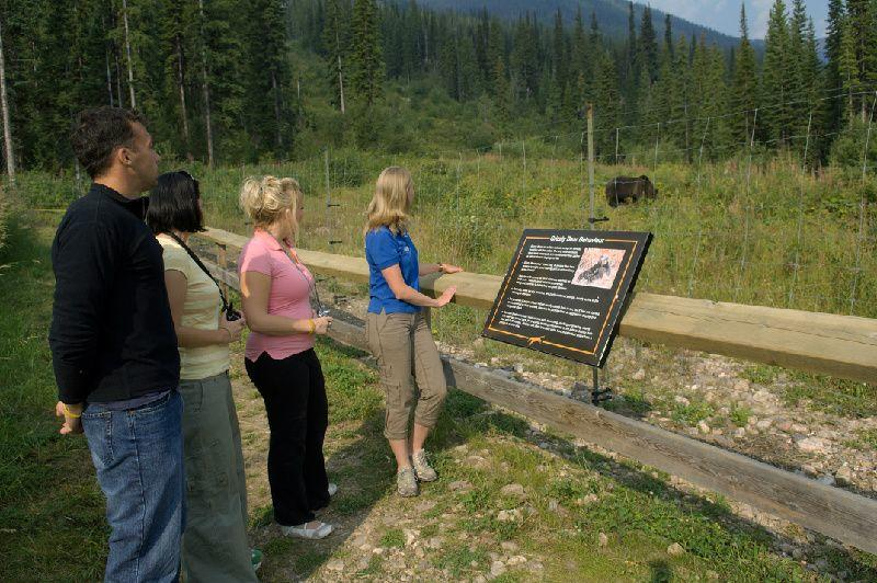 Discover Grizzly Bears