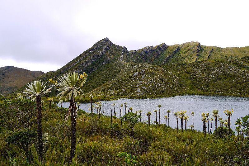 Chingaza National Park Hiking Tour w/ Spanish Guide