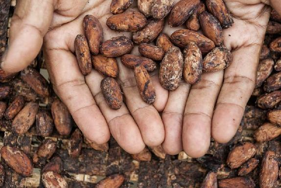 Private ''Cacao Route'' Day Trip From Guayaquil