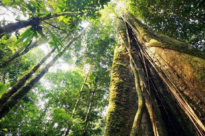 7-Day Local Living Ecuador - Amazon Jungle Tour