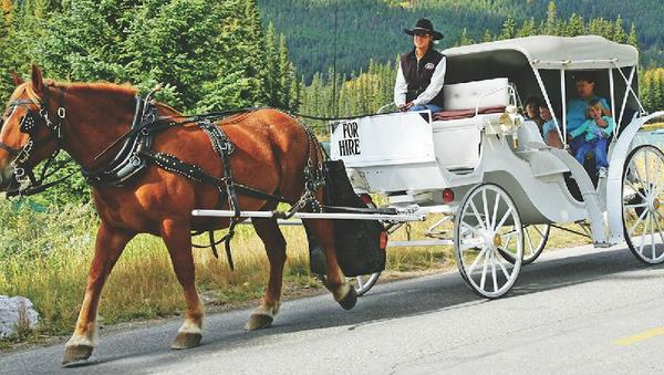 Private Bow River Horse-Drawn Carriage Ride