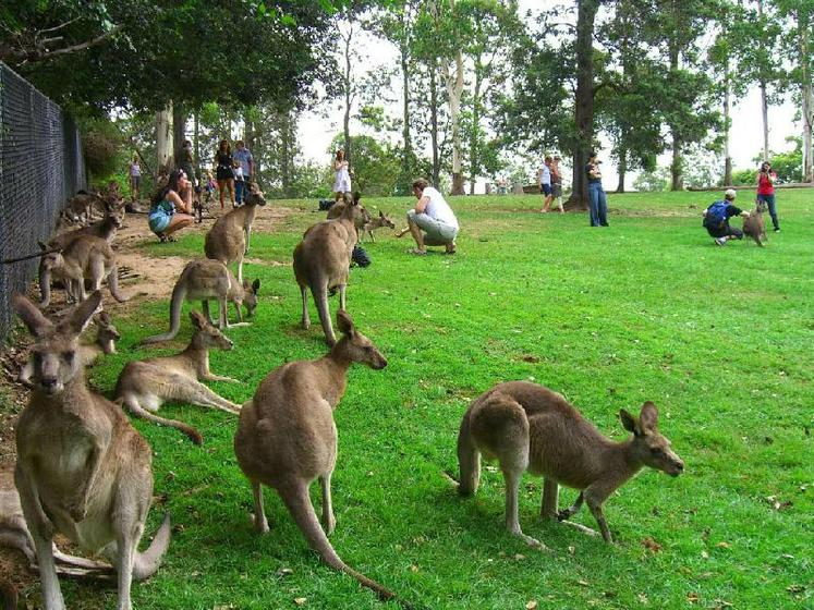 Afternoon Brisbane City Tour with Koala Sanctuary
