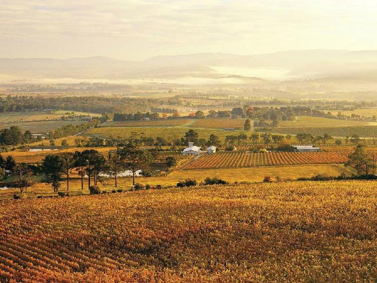 Yarra Valley Wine Tour