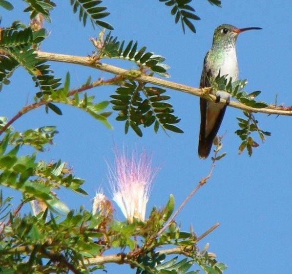 Private Yunguilla Valley Birdwatching Tour
