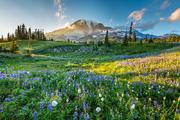 7-Day Yellowstone and Mt Rainier Tour From Seattle