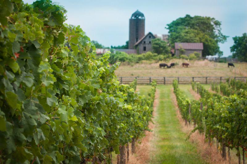 Virginia Wine Tour From DC