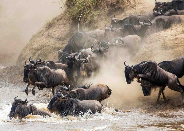 6-Day Great Wildebeest Migration Adventure