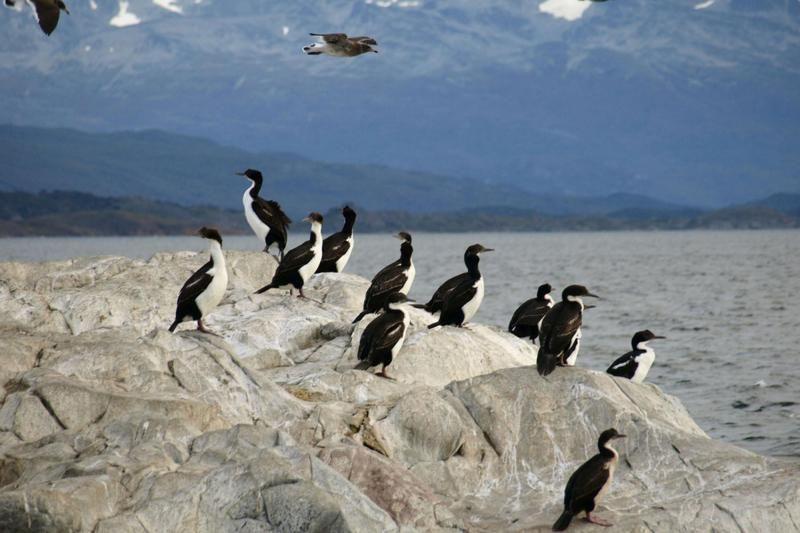 Ushuaia Catamaran Voyage to Penguin Island and Estancia Harberton