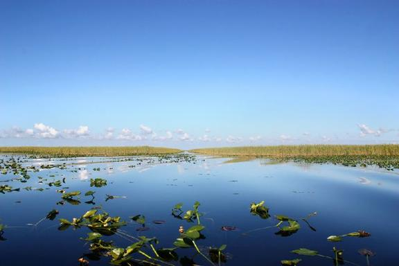 Everglades Holiday Park + Miccosukee Indian Village Day Trip From Fort Lauderdale