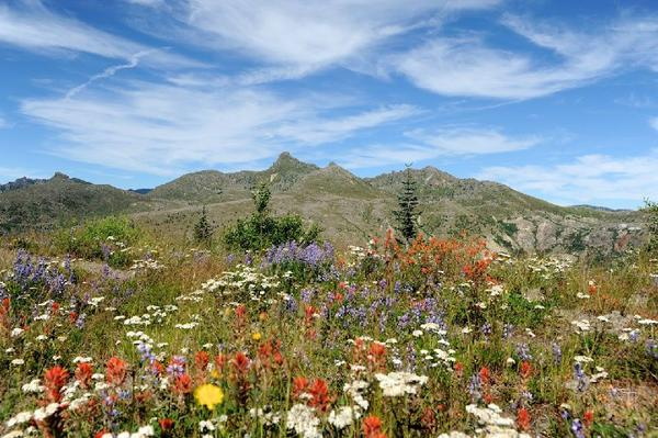Mt St Helens Tour From Seattle**Max 10 Guests Per Tour**<br>** All-Inclusive**