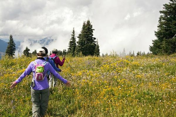 Olympic National Park Tour From Seattle**Max 10 Guests Per Tour**<br>** All-Inclusive**