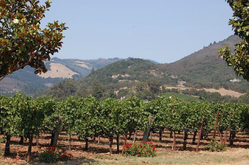 Sonoma Wine Tour W/ Redwoods