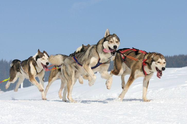 Quebec & Valcartier Winter Tour From Montreal with Dog Sledding & Ice Hotel