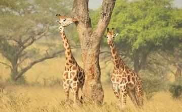 3-Day Murchison Falls National Park Adventure Tour from Kampala
