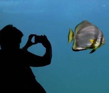 Monterey & Carmel Day Trip From San Francisco W/ Aquarium Tickets
