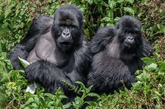 4-Day Uganda Gorilla Trekking Safari