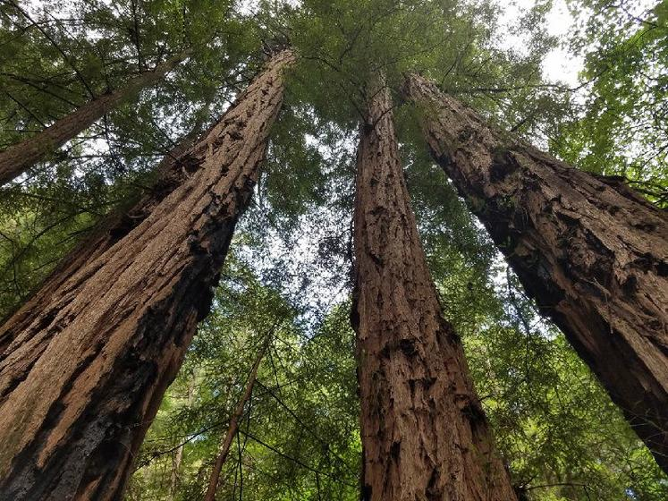 Muir Woods Tour W/ Sausalito & Ferry Bay Cruise