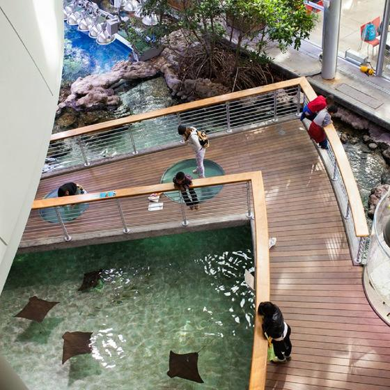 California Academy of Sciences Behind-the-Scenes: Aquarium Tour