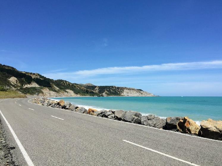 Full-Day Palliser Bay Tour