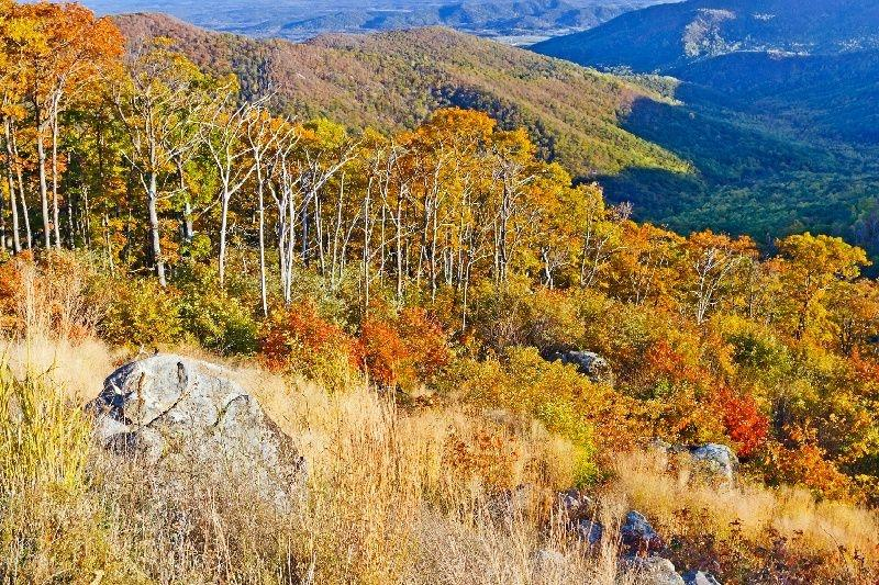 1-Day Virginia Shenandoah National Park Tour