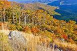 1-Day Virginia Shenandoah National Park Tour