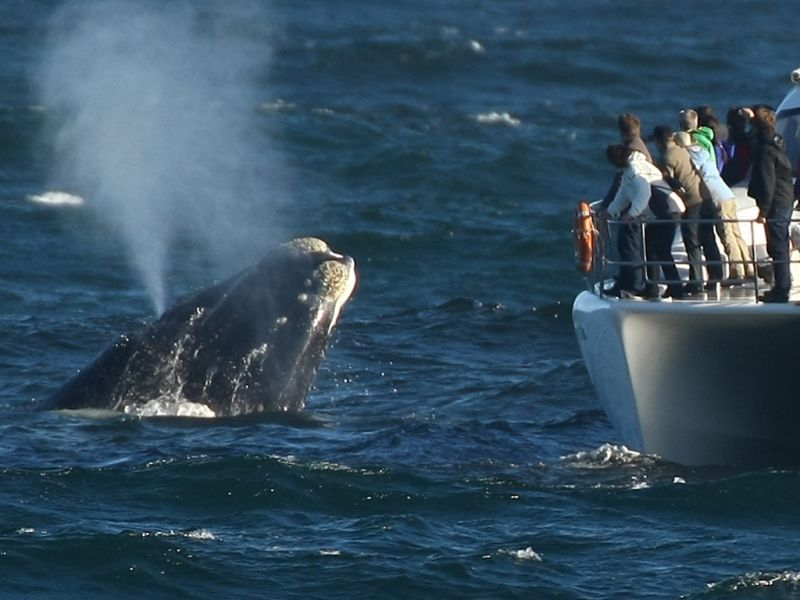 Hermanus Whale Watching Tour