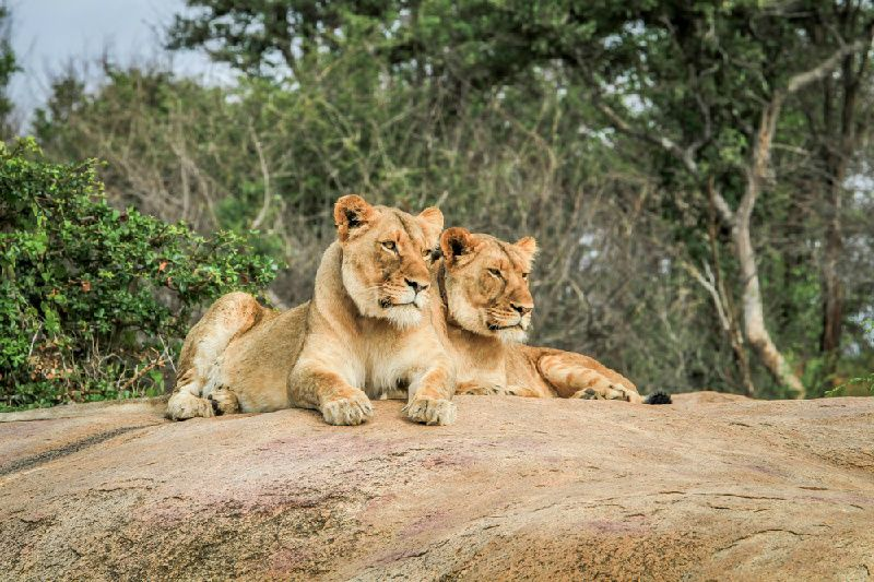 3-7 Day Classic Kruger Park Safari at Skukuza Camp