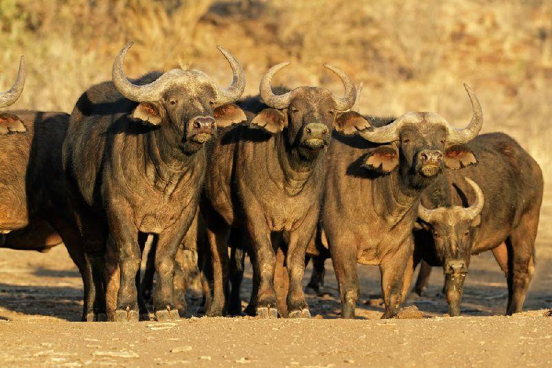 2-Day Inverdoorn Safari at a Guest House W/ Transfer from Johannesburg