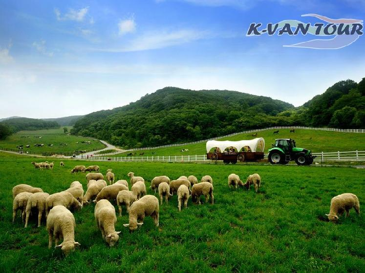 Private PyeongChang Eco Tour W/ Sky Ranch & Temple Stay