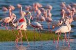 Lake Nakuru National Park Day Trip from Nairobi