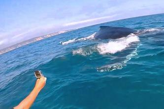 Port Stephens Whale Watching Cruise from Sydney