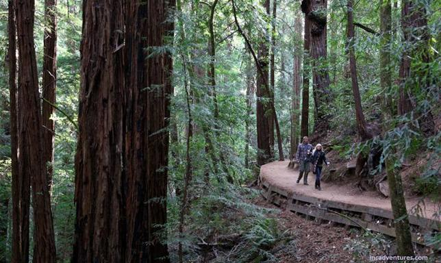 Muir Woods + Sonoma Wine & Beer Tour