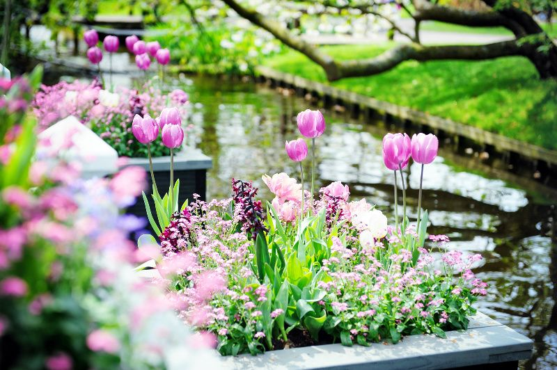Keukenhof Tickets with Transfers to/from Amsterdam**Skip the Line Admission**