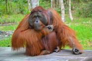 5-Day Borneo Orangutan Tour in Tanjung Puting National Park**From Pangkalan Bun**