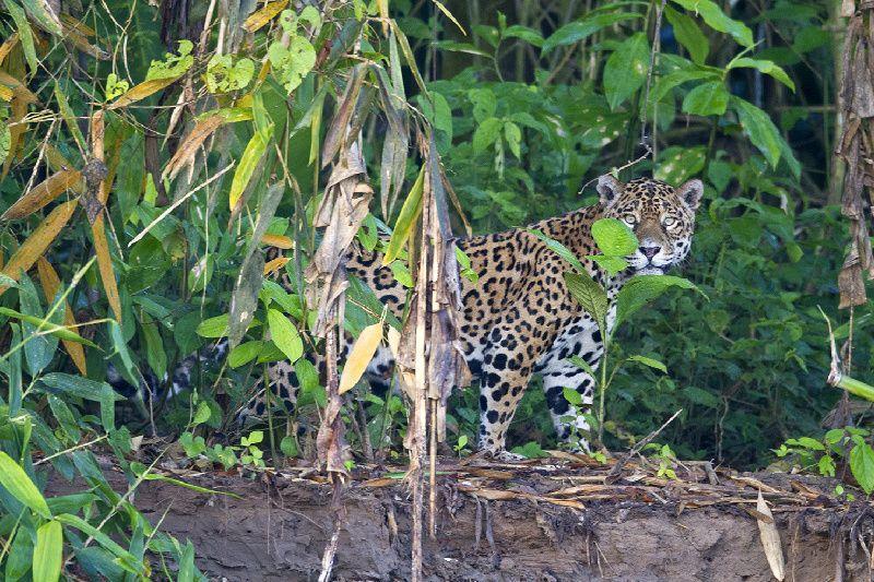 4-Day Refugio Amazonas - Classic Program